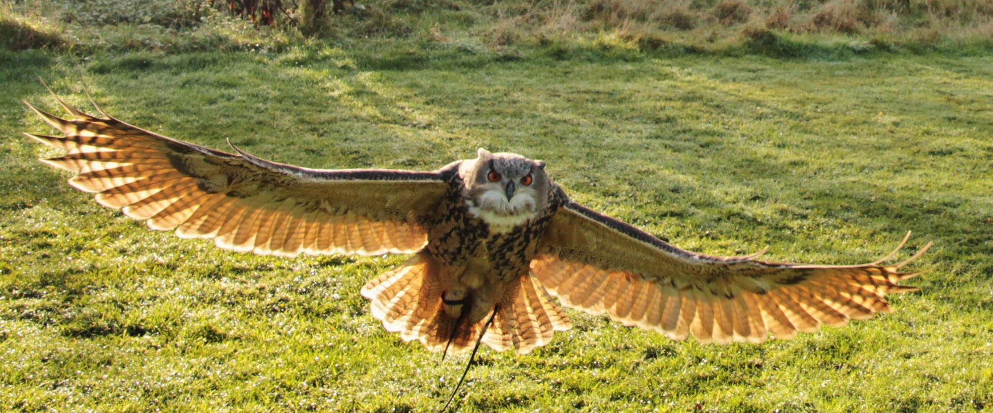 Taken whilst on a day out a falconry centre  near glen eagles in Scotland uk.