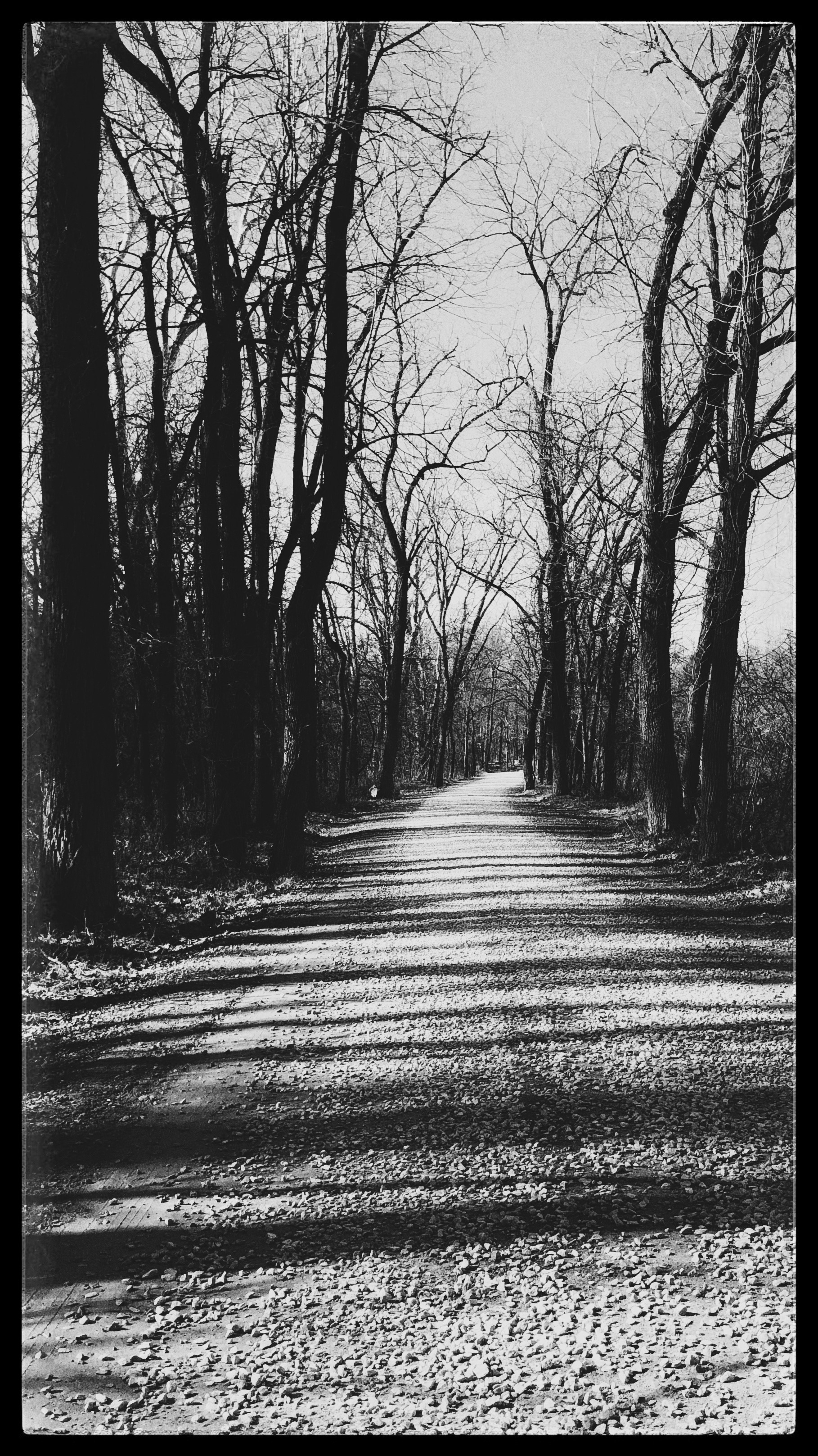 Black And White Image Of a Trail