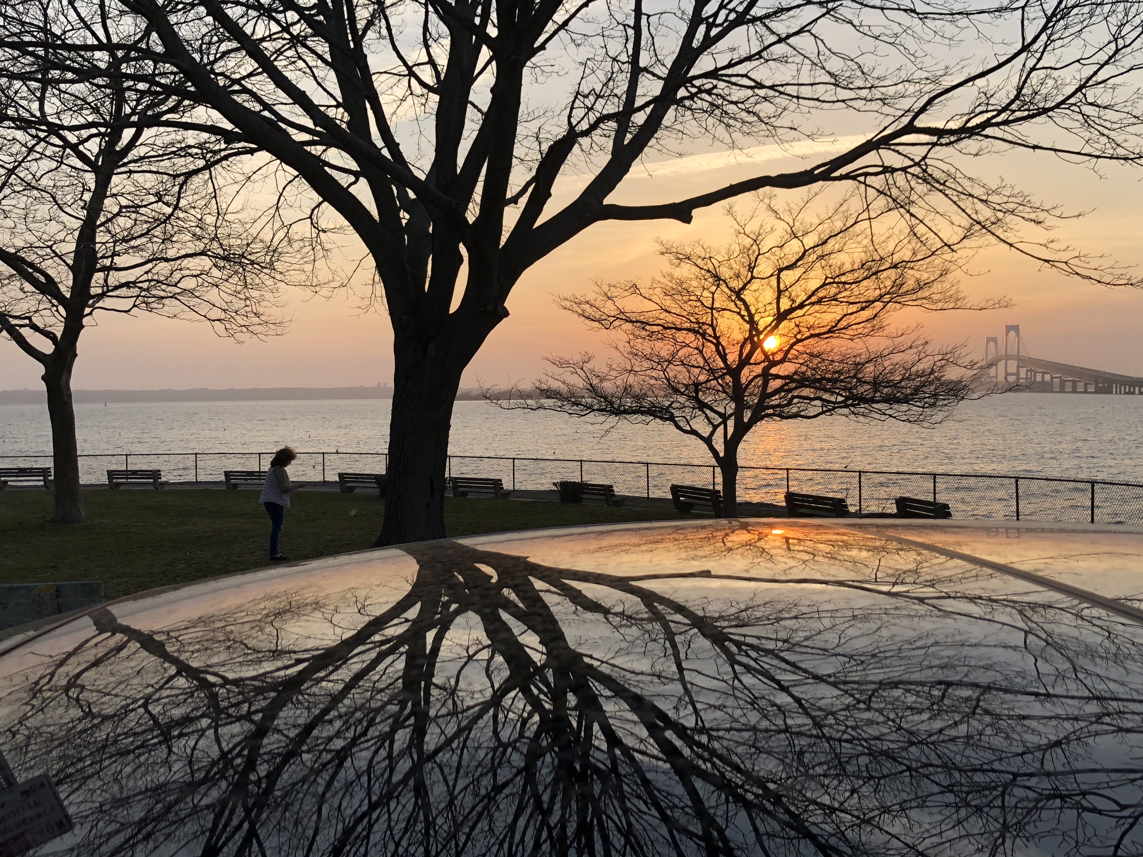 Tree Reflection on car roof at sunset