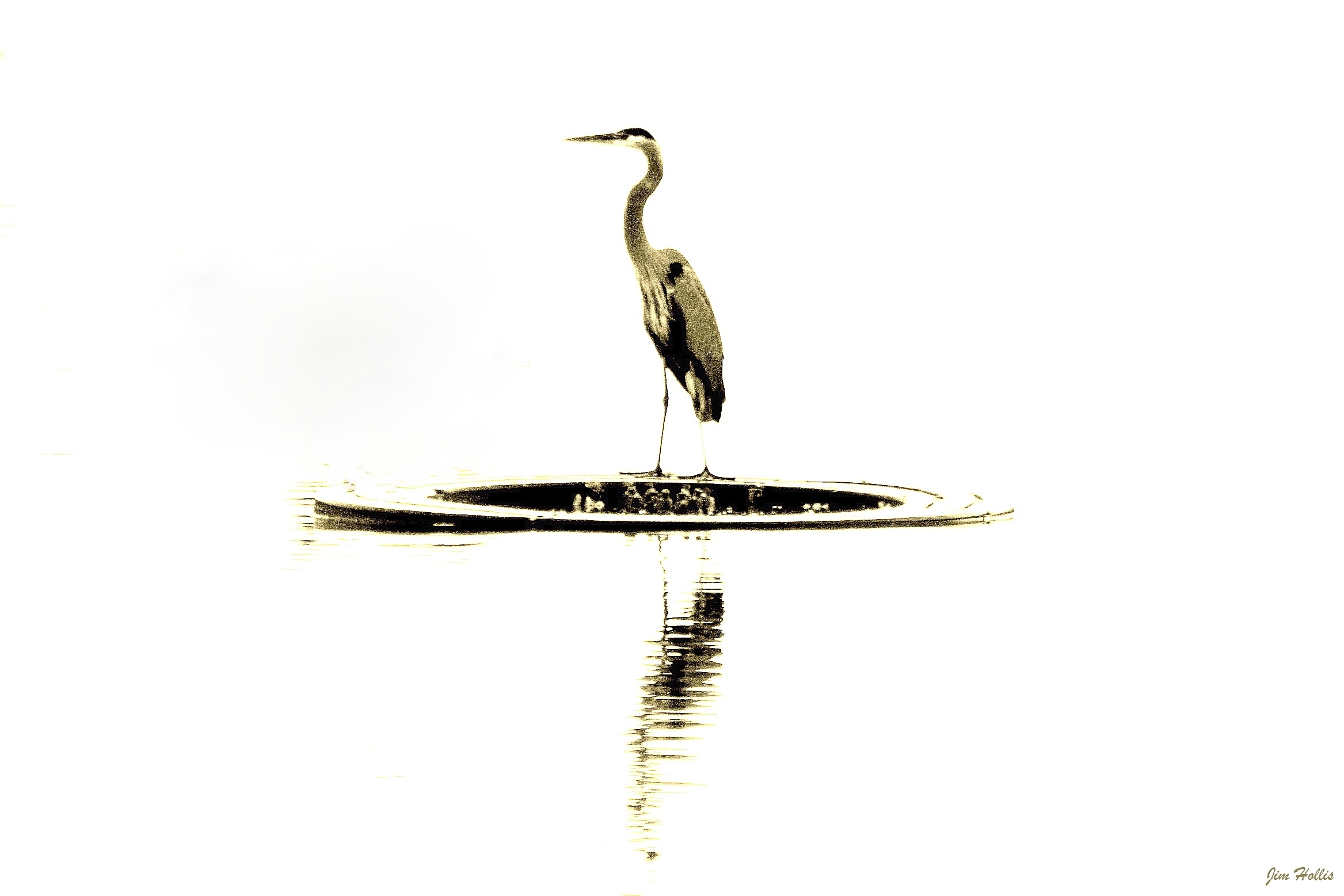 A Great Blue Heron. Image captured at Webster Lake in Northglenn, Colorado. I intentionally over-exposed to get a different effect.