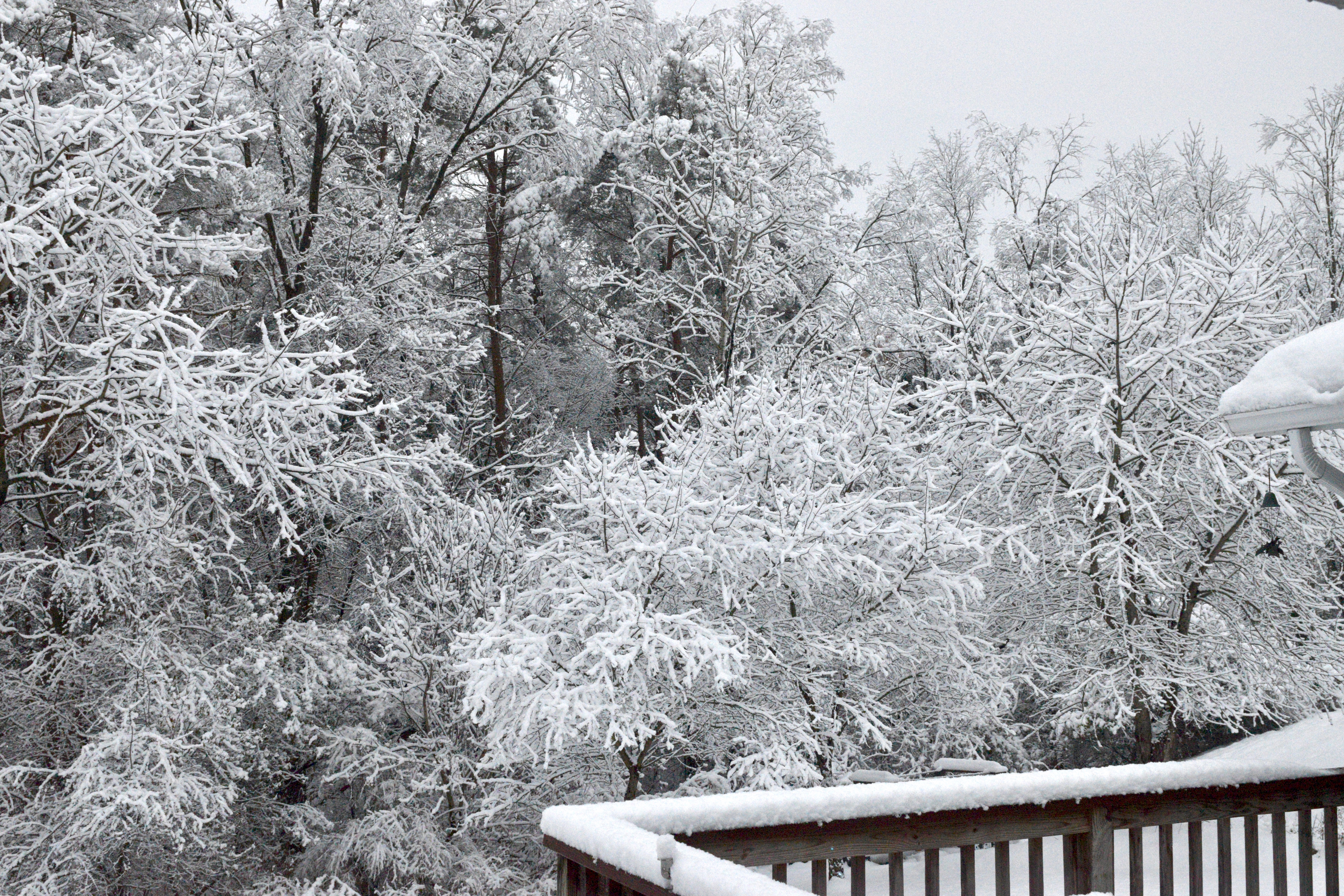 No shortage of white in upstate ny this time of year...