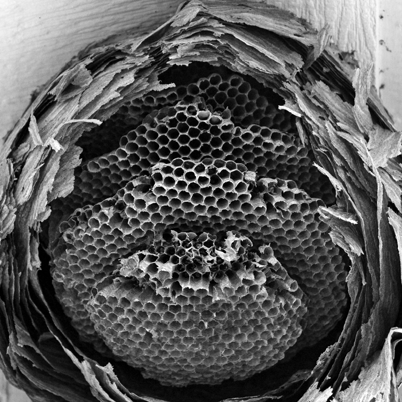 Wasp Nest Light Stalking