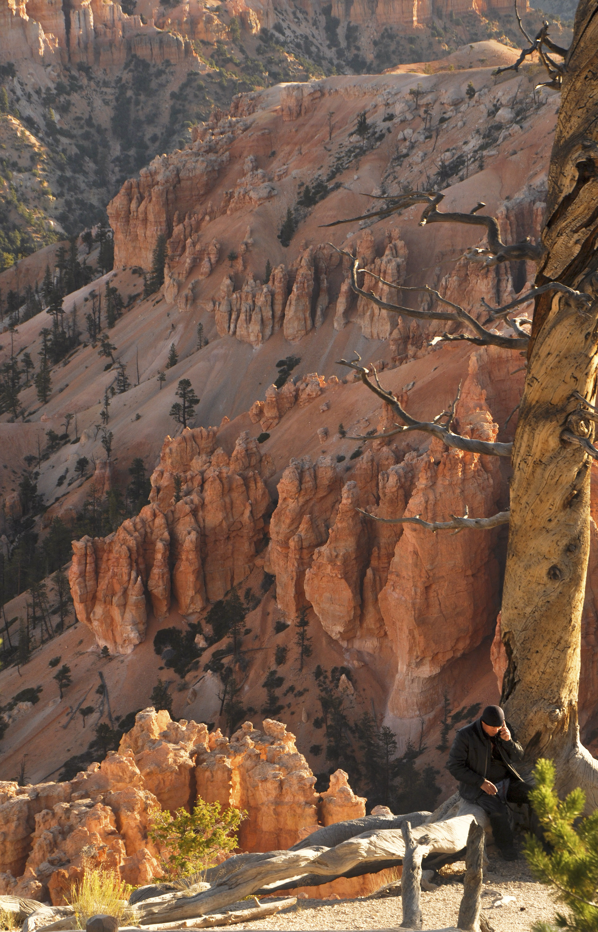 """A Matter of Perspective"" This was taken in Bryce Canyon, Utah. I found it ironic."