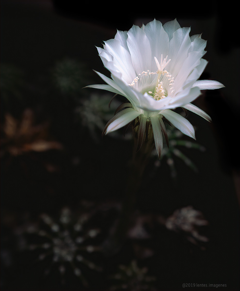 Cactus Flower in Color with Critiques Incorporated