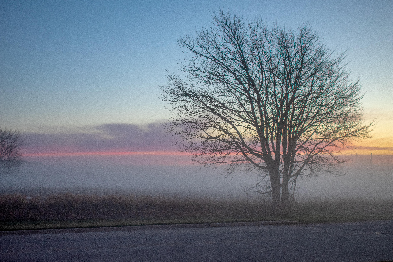 Springtime Fog