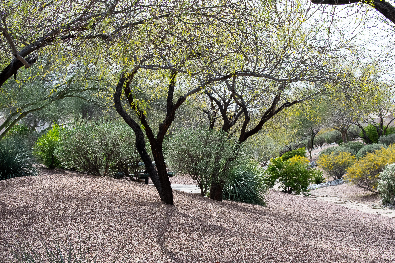 Springtime Desert