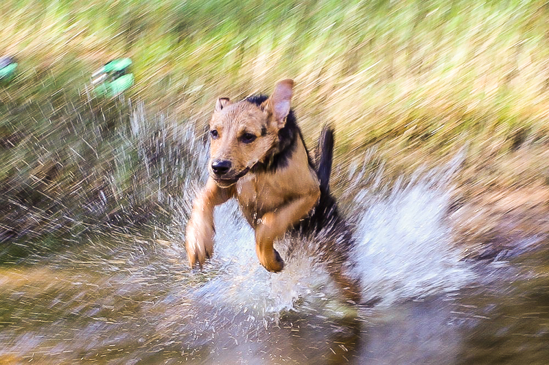 Dalby leaping out of the river