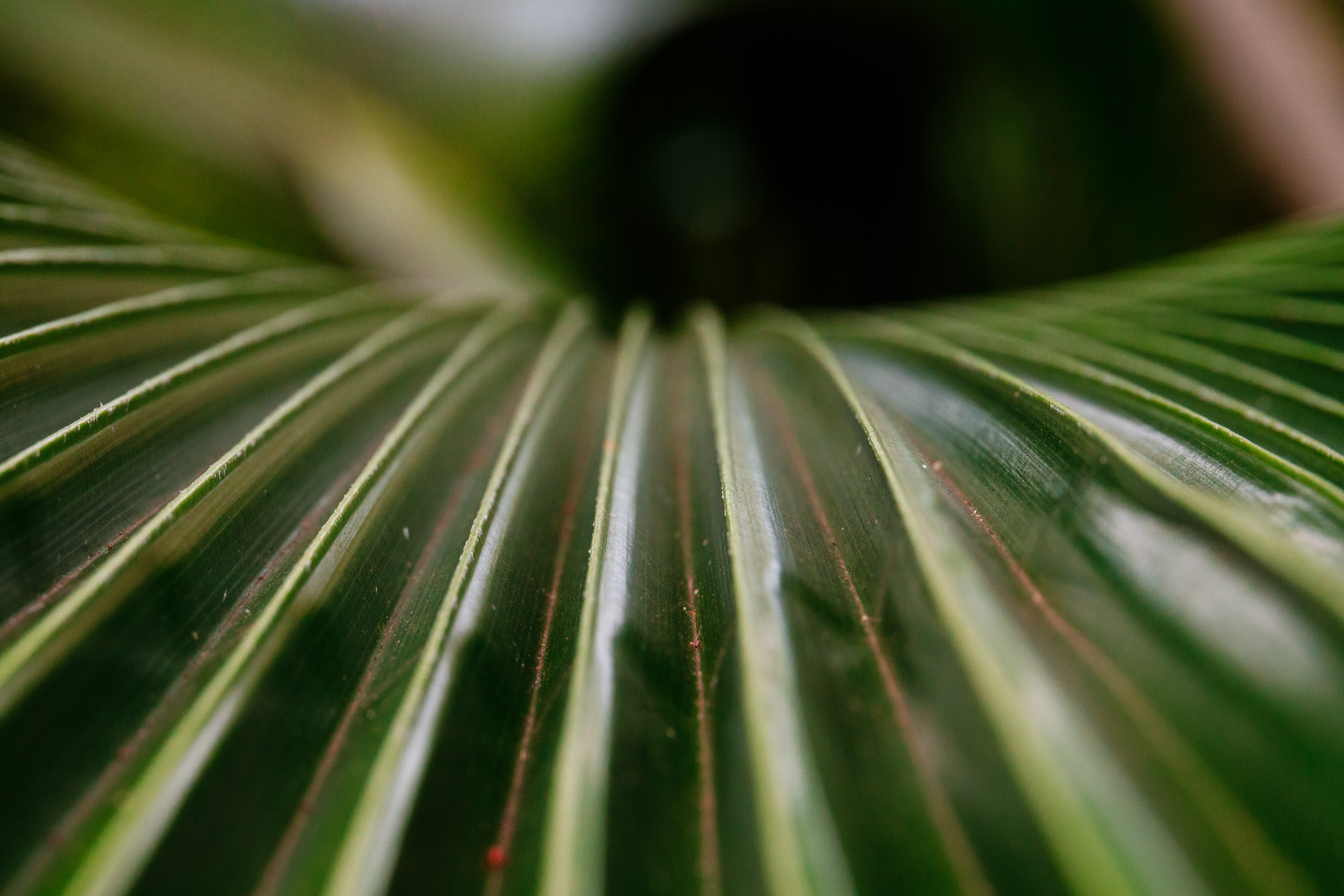 Palm leaf. I was at a photo talk with Tamron and checked out the new 24-135. Then went and played with it