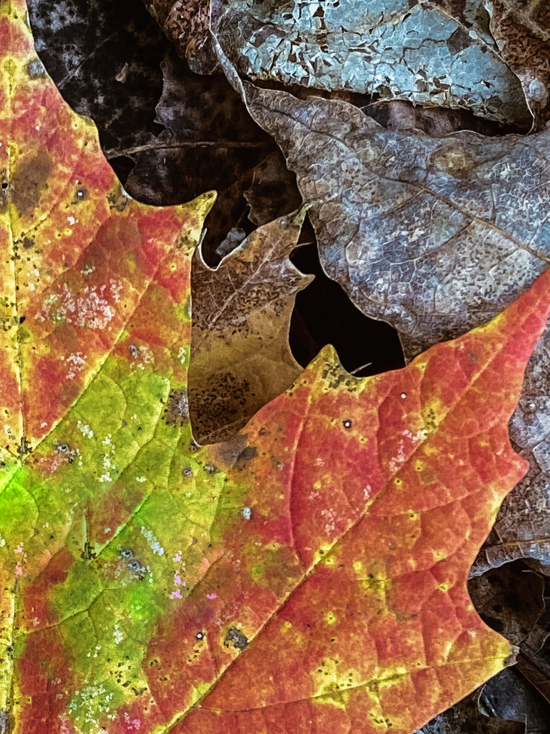 Fall transition - A leaf's texture becomes more prominent in the Fall when its nutrient phase changes.