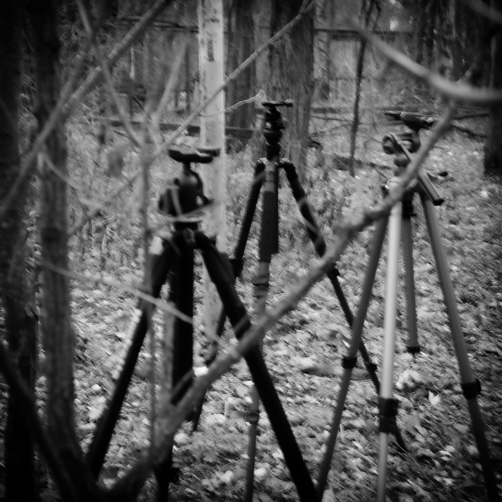 Mistaking the Tripods for the Trees