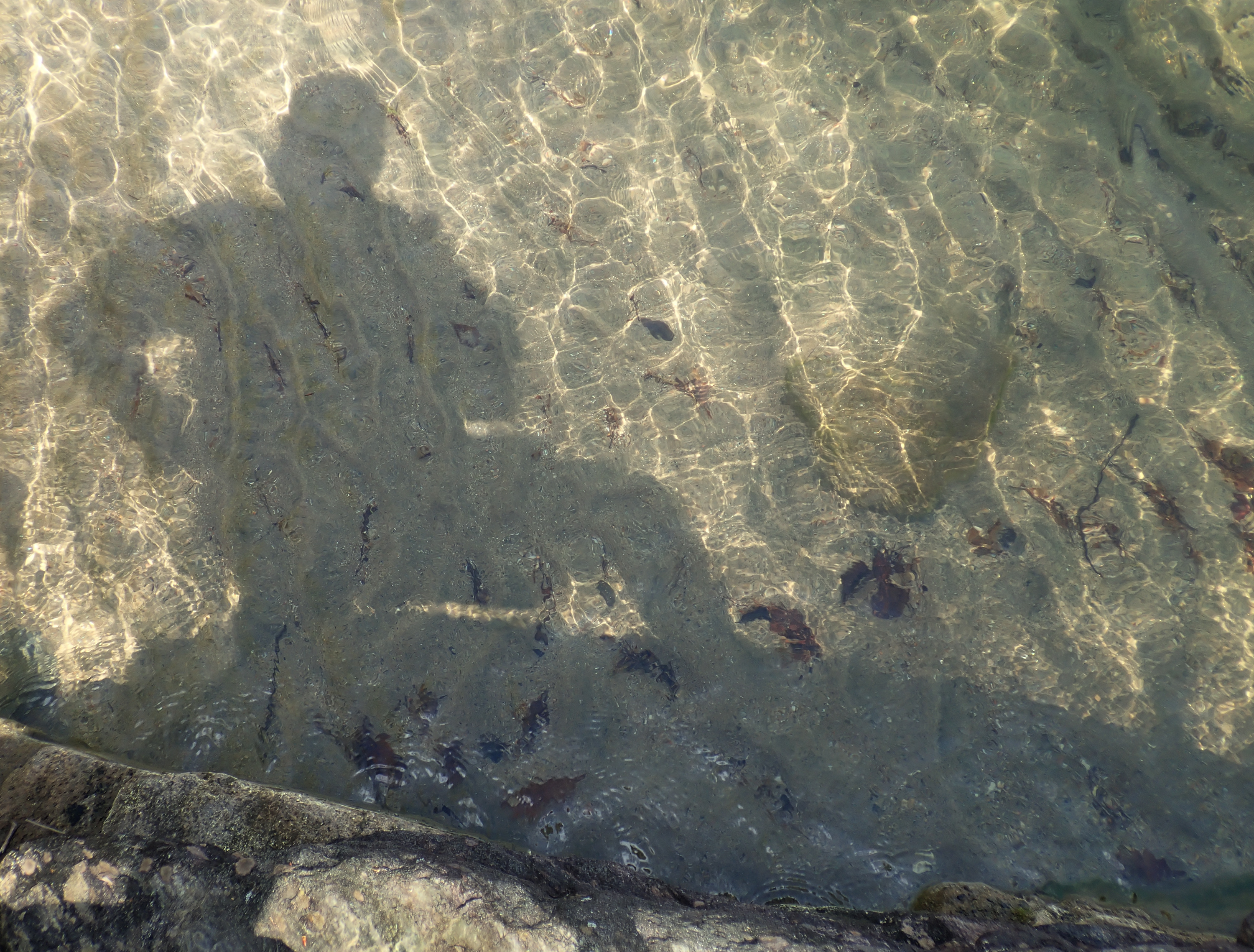 Shallow Water Shadow