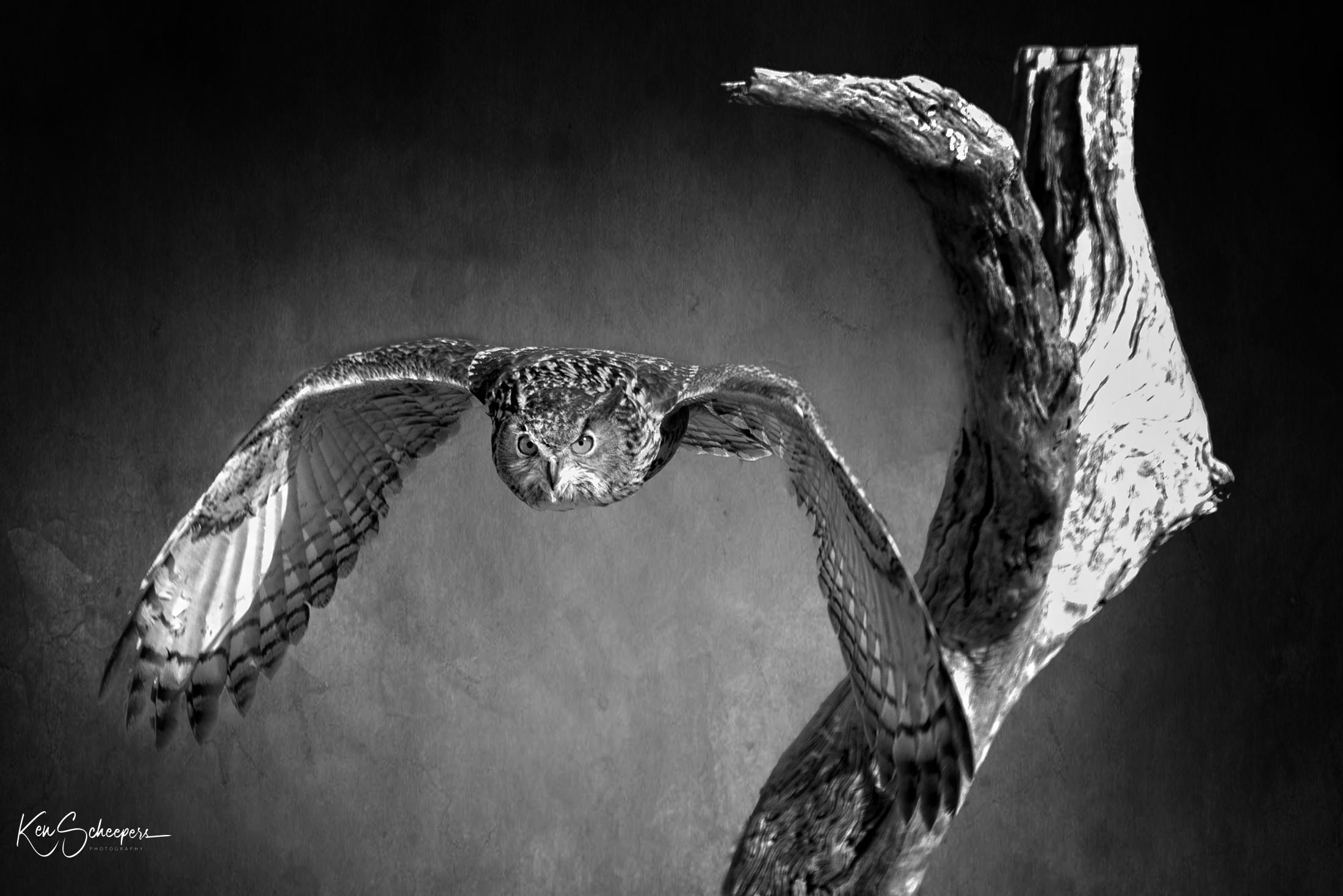 2018 shot of an Eurasian Owl