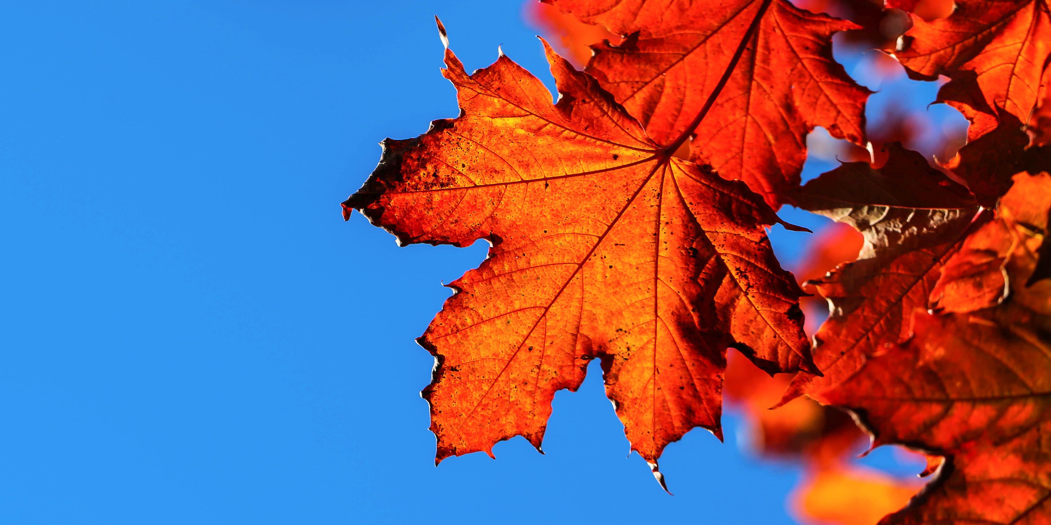 Autumn leaf against blue sky