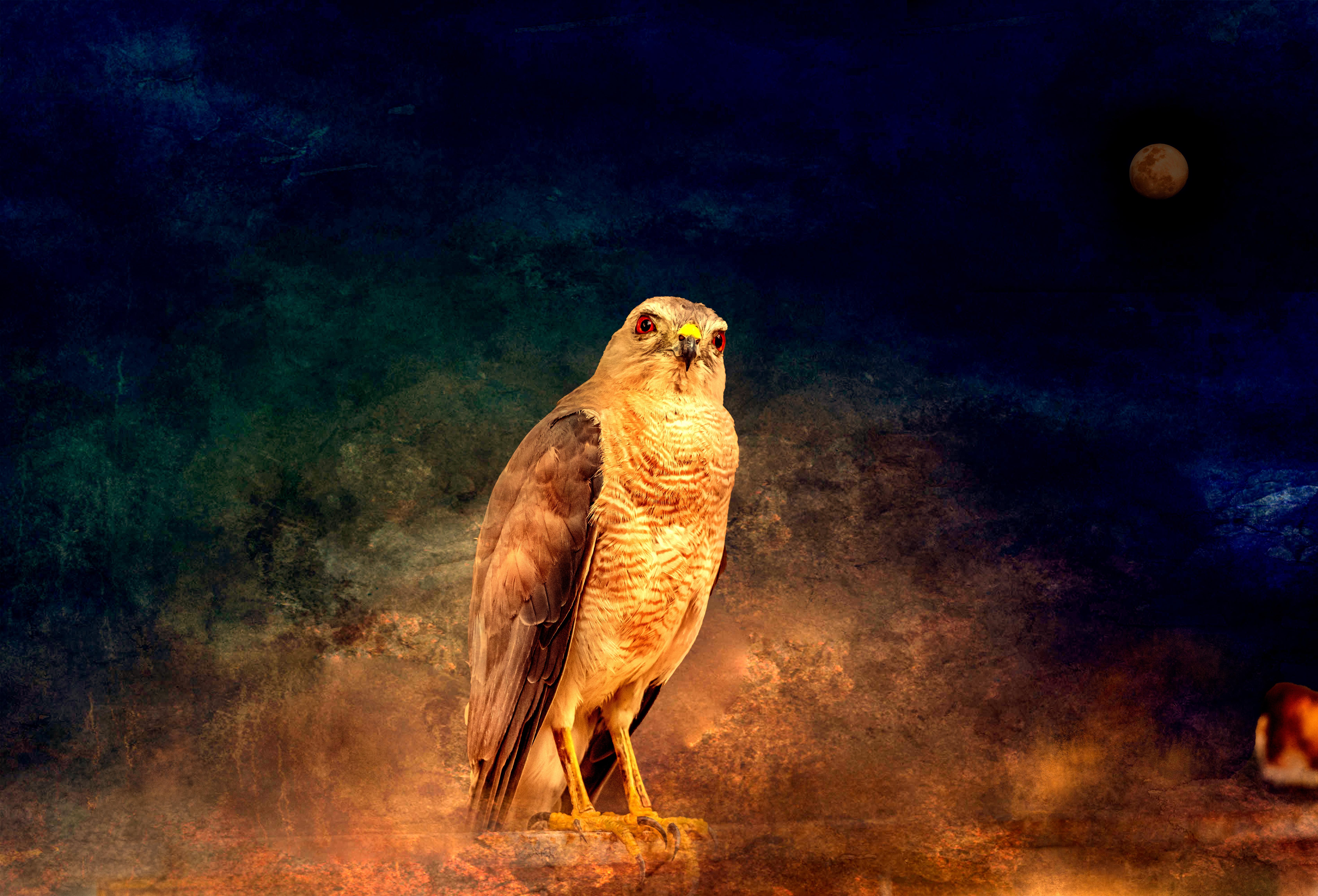 Falcon Gaze